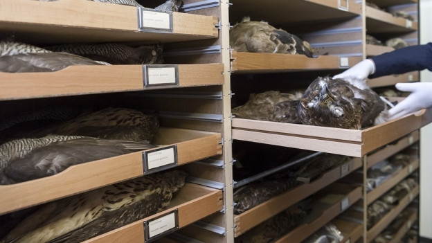 Im Naturhistorischen Museum Bern wurden Federn gestohlen.