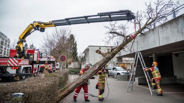 Kran der Feuerwehr räumt einen Baum von einem Gebäude.