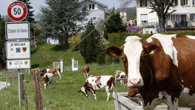 In Châtel-Saint-Denis stossen nicht nur die Kühe Methangas aus.