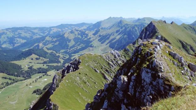 Ab den 1990er-Jahren gab es jährlich Sichtungen des Gänsegeiers in der Schweiz.