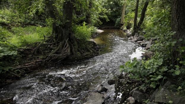 Das bernische Grundwasser ist in der Regel von guter Qualität.