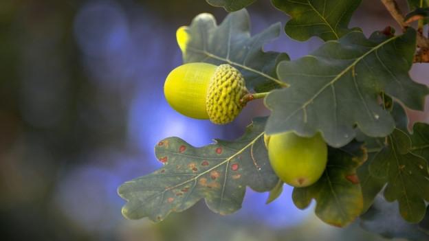 Welche Baumarten in welchen Gebieten künftig am besten geeignet sein werden, wird derzeit erforscht.