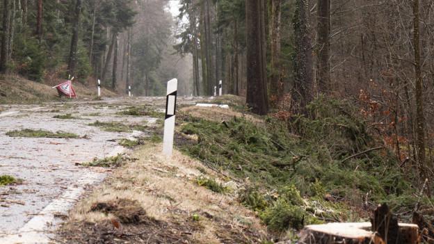 Im Berner Jura stürzten Bäume auf Strassen und Bahnlinlien.