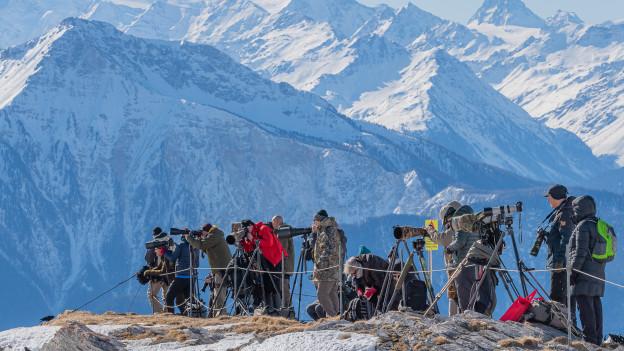 Immer mehr Menschen wollen die Bartgeier im Wallis sehen.