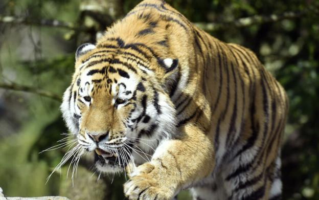 Der Walter Zoo ist alarmiert nach tödlichem Tiger-Angriff in Zürich
