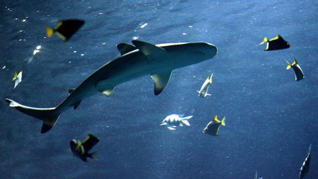 Tierschützer kritsieren die Haltung von Meerestieren in Aquarien