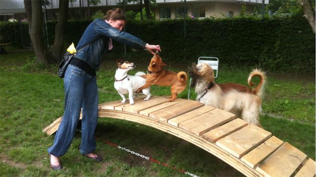 """Hunde freuen sich ab der """"Brücke der Weisheit"""""""