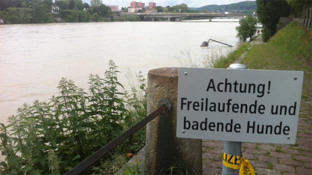 Badezone für Hunde am Rhein in Basel