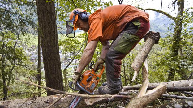Waldarbeit wird immer teurer