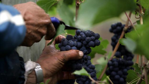 Weinbauern müssen sich noch gedulden