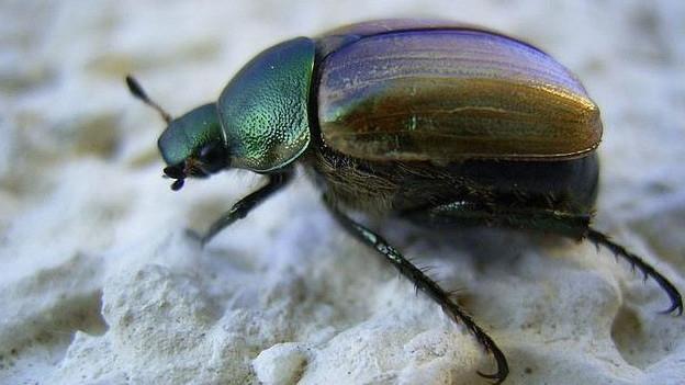 Das Naturhistorische Museum Basel muss seine Sammlung zügeln - darunter Millionen von Käfern.