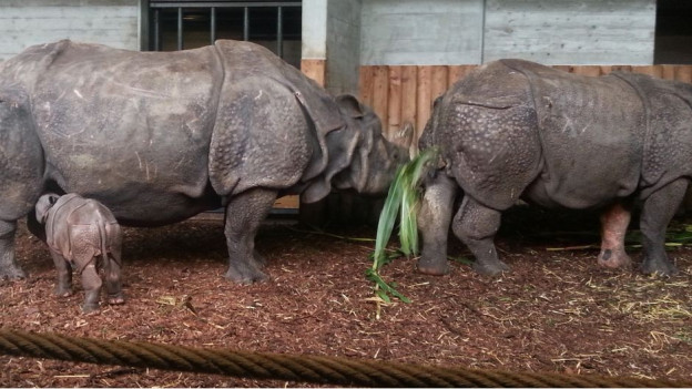 Die Nashorn-Familie im Basler Zolli.