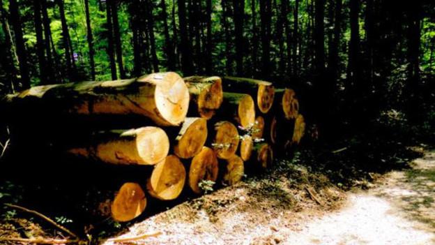 Buchenholzbaumstämme am Waldrand
