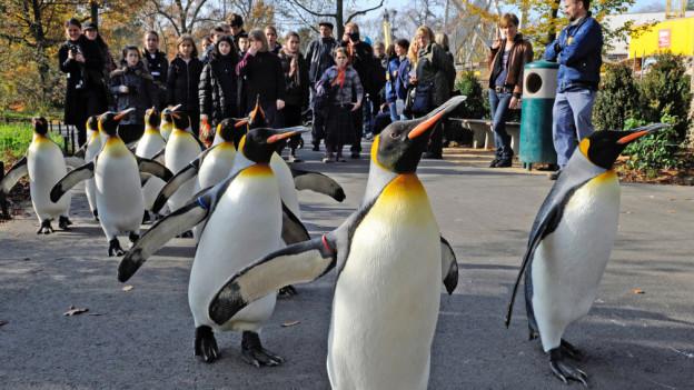 Pinguine auf Spaziergang