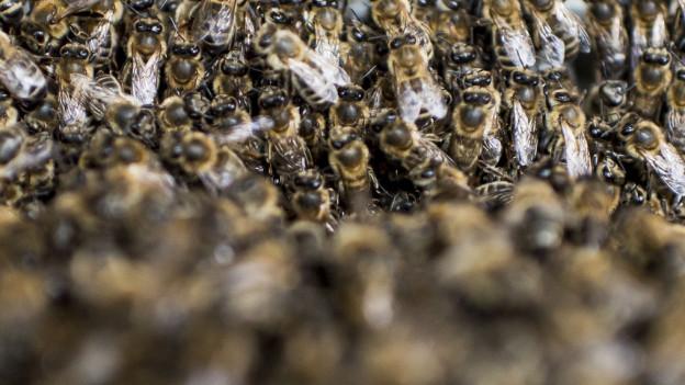 Bienenseuche wütet rund um Binningen.