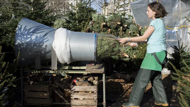 Ein Weihnachtsbaum wird verpackt