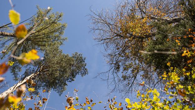 Der Wald - wieviel ist er den Menschen wert?