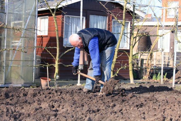 Alter Mann ackert Garten um
