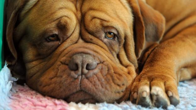 Hundestatistik