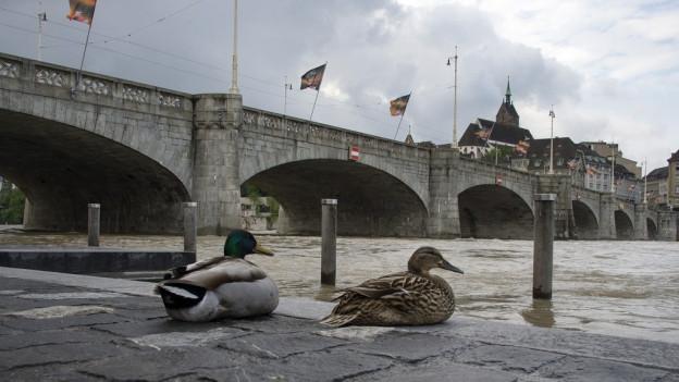 Wegen dem Hochwasser ist ein Bad im Rhein zu gefährlich.