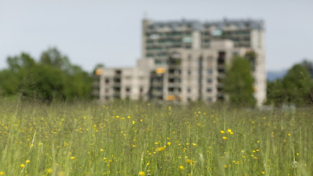 Grüne Wiese im Vordergrund, Wohnblock im Hintergrund