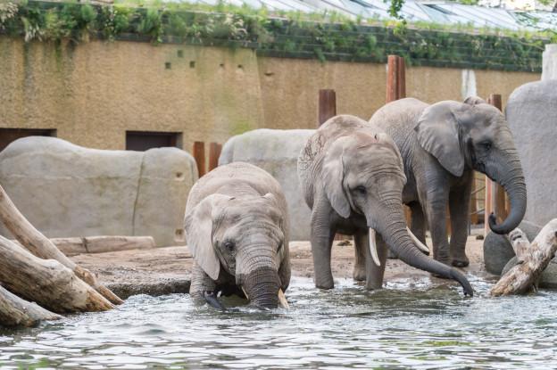 Drei Elefanten stehen vor einem Becken
