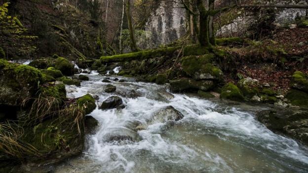 Vor allem kleinere Gewässer, also Bäche, sind verschmutzt
