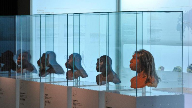 Exponate im Naturhistorischen Museum