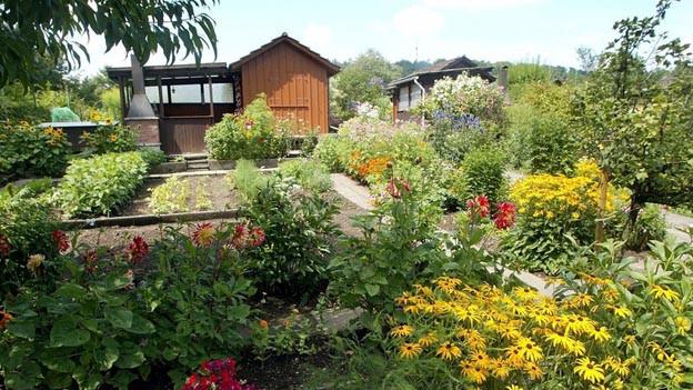 Zuviel Blei in Basler Familiengärten