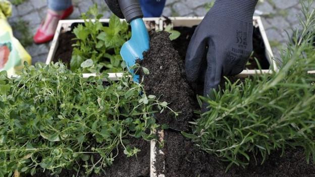 Zu den sozialen Projekten gehören viele im Bereich «Urban Gardening».