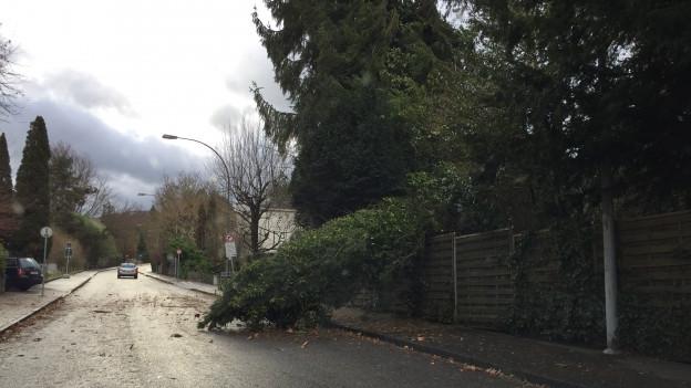 In Riehen fiel wegen des Sturms ein Baum auf die Strasse.