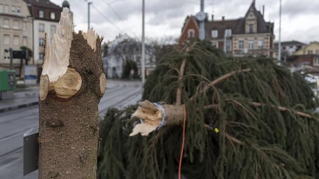 Geknickter Weihnachtsbaum