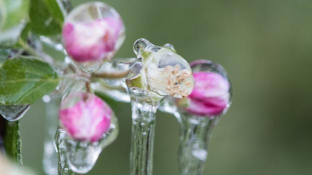 Der Frost hat das Baselbiet besonders hart getroffen