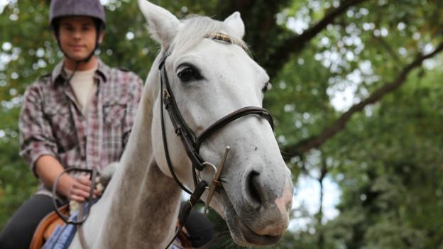 Pferde machen Mist. In Seltisberg hat man daran keine Freude.