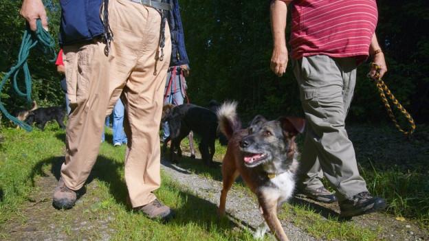 Hunde sollen in der Lange Erlen an die Leine, fordert der Grosse Rat.