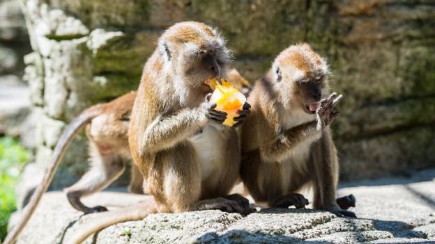 Zolli-Tiere sind froh um Abkühlung