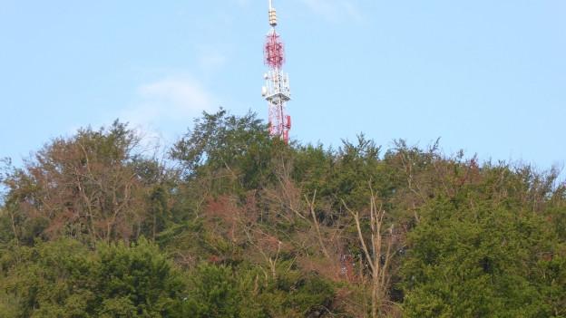 Wald in Sissach - mit abgestorbenen Bäumen.