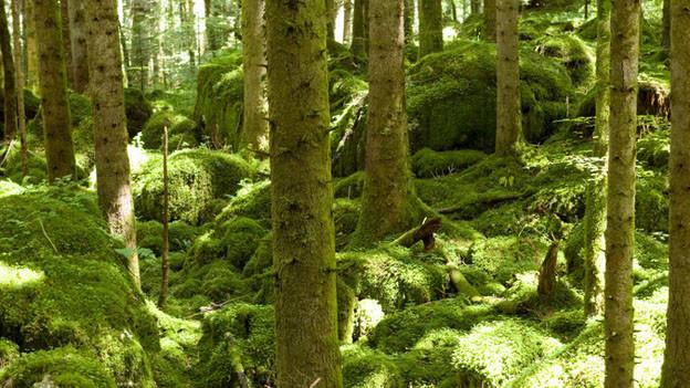 Stress auch für die Bäume in der Region Basel