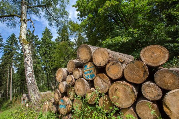 Baselbiet will «Problempflanzen» bekämpfen