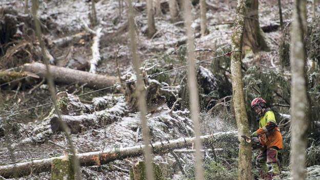 Burglind brachte Bäume zu Fall