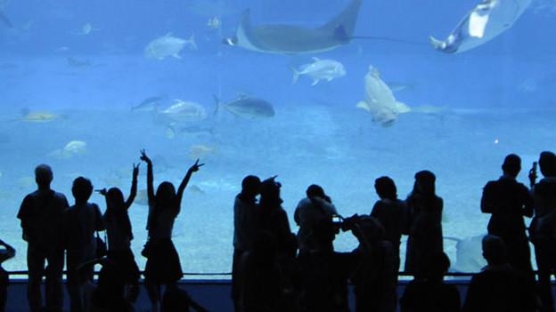 Leute vor Aquariumscheibe