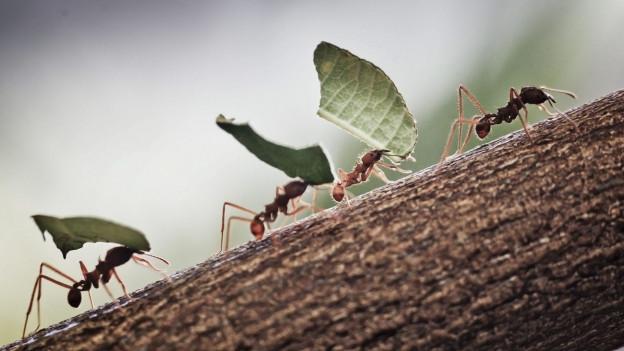 1800 Ameisennester in der Region