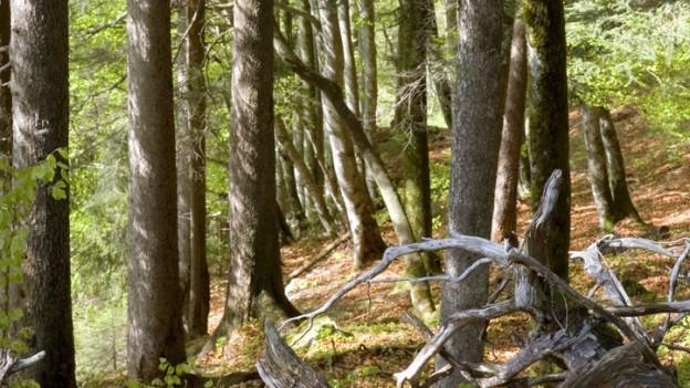 Der Klimawandel im Wald kostet auch Geld