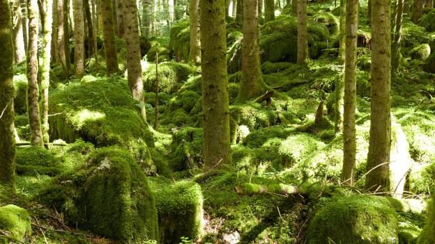 Den Wald sich selbst überlassen in Waldreservaten.
