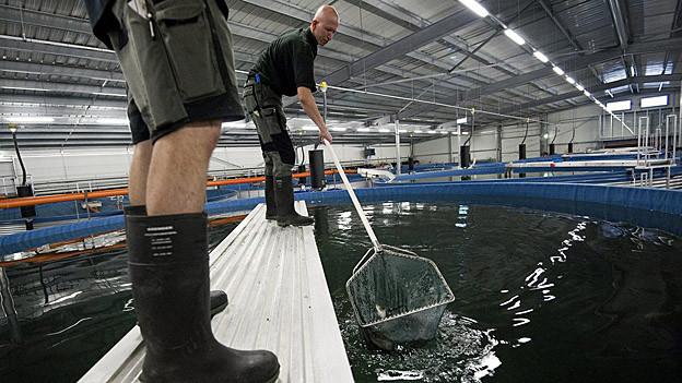 Die Abwärme der KVA Trimmis soll eine Fischzuchtanlage beheizen.
