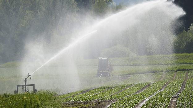 Das Domleschg setzt auf zusätzliche Bewässerung
