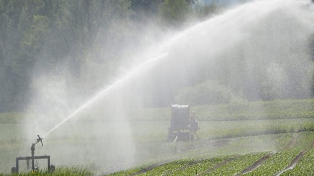 Keine künstliche Bewässerung im Domleschg.