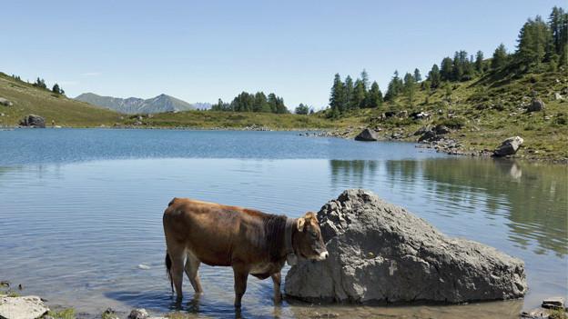 2013 wurden 550 Tonnen Alpkäse produziert.