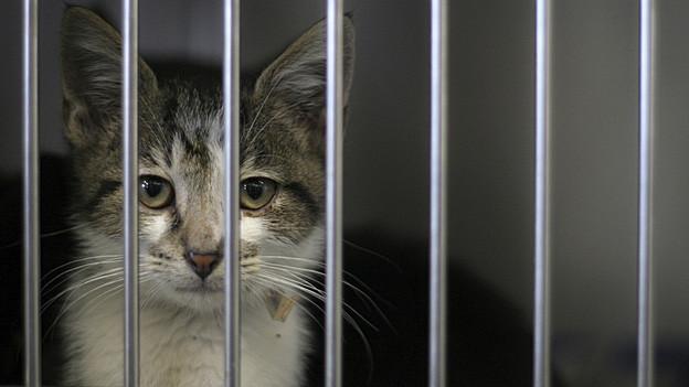 Katze in einem Käfig
