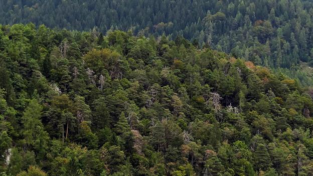 Bündner Wald